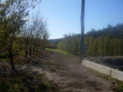 Perth hills.. The orchards in winter .